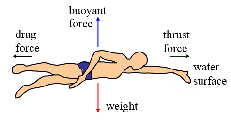 physics of swimming during swimming