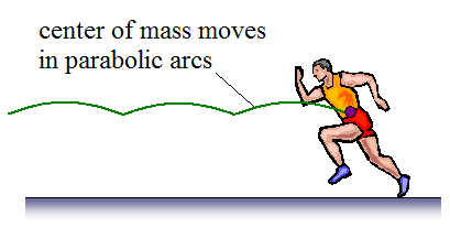 parabolic arc traced by runners center of mass
